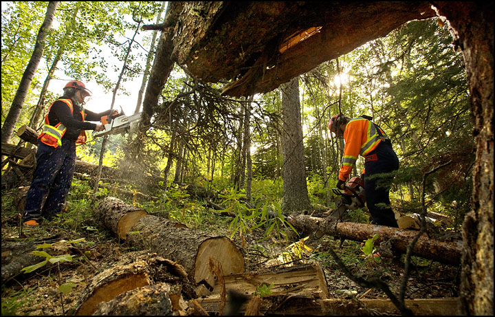 rj_nait_forestry_100909_16