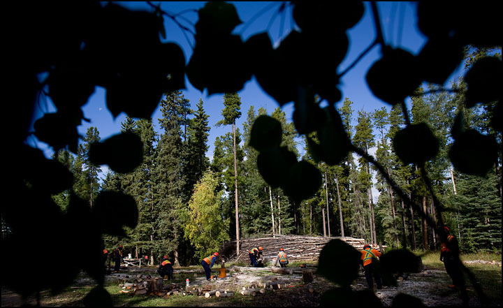 rj_nait_forestry_100909_17