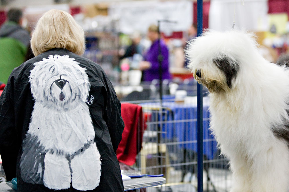 Old english sheep dog Paris checks out her owner Linda Smith's jacket during the Edmonton Kennel Club annual fall all-breed dog show at Northlands AgriCom in Edmonton on October 10, 2009.